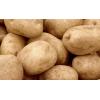 Картофель оптовые цены