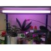 Фитолампа fluora для растений